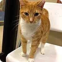 Adopt A Pet :: Peaches - Colmar, PA