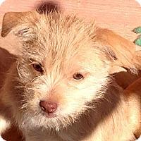 Adopt A Pet :: Dina - Staunton, VA