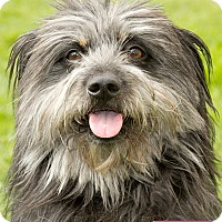 Adopt A Pet :: Chance - Marina del Rey, CA