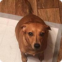 Adopt A Pet :: Penny Lane - Washington, DC