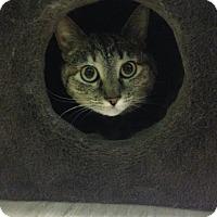 Adopt A Pet :: Penny - Menands, NY