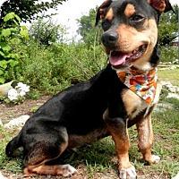 Adopt A Pet :: Princess - Tyler, TX