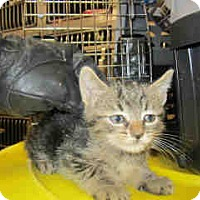 Adopt A Pet :: Sundae - Newnan City, GA
