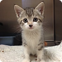 Adopt A Pet :: H-4 female - Triadelphia, WV