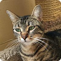 Adopt A Pet :: Abby - Chula Vista, CA