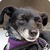 Adopt A Pet :: Pixie - Oakley, CA