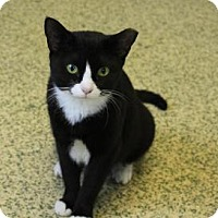 Adopt A Pet :: Minnie - Indianapolis, IN