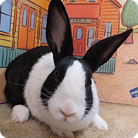 Dutch Mix for adoption in Foster, Rhode Island - Collette
