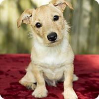 Adopt A Pet :: Beemer -N - Alvin, TX