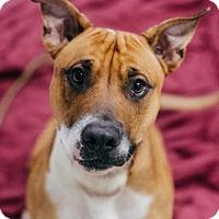 Adopt A Pet :: Timbo - Binghamton, NY