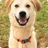 Adopt A Pet :: Anika - Media, PA