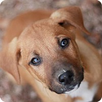 Adopt A Pet :: Aster - Cookeville, TN