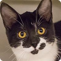 Adopt A Pet :: Poni - Toronto, ON