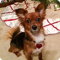 Adopt A Pet :: Foxy - Savannah, GA