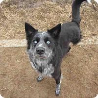 Adopt A Pet :: HANNAH - Plano, TX