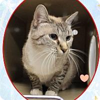 Adopt A Pet :: Cleo - Butner, NC