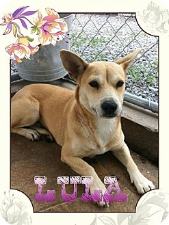 Corgi Mix Dog for adoption in Donaldsonville, Louisiana - Lula