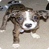 Adopt A Pet :: MAGGIE - Palmyra, WI