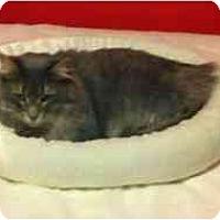 Adopt A Pet :: Fiona - Manalapan, NJ