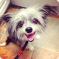 Adopt A Pet :: Penelope - Orange, CA