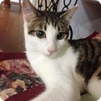 Adopt A Pet :: Jaex - Vancouver, BC