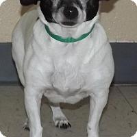Adopt A Pet :: Buttons - North Bend, WA
