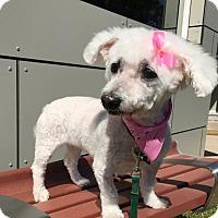 Adopt A Pet :: Ariel - Wilmington, DE