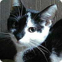 Adopt A Pet :: Cynthia - Brighton, MO