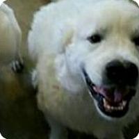 Adopt A Pet :: Kahn - Valparaiso, IN
