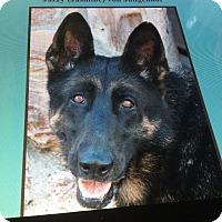 Adopt A Pet :: JAZZY (Jasmine) Von Jungenhof - Los Angeles, CA