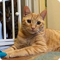 Adopt A Pet :: Rusty - Novato, CA