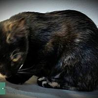 Adopt A Pet :: Venus - Fairborn, OH