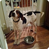 Adopt A Pet :: Daniel - Richmond, VA