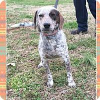 Adopt A Pet :: Axel (Pom-dc) - Harrisonburg, VA
