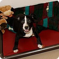 Adopt A Pet :: Rogue - Salem, WV