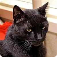 Adopt A Pet :: Marcus - Duluth, MN