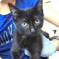Adopt A Pet :: Candace - Covington, KY