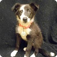 Adopt A Pet :: *QUIGLEY - Upper Marlboro, MD