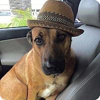 Adopt A Pet :: Cassie - San Clemente, CA