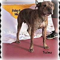 Adopt A Pet :: Thelma - Eden, NC