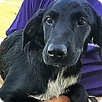 Adopt A Pet :: Garanimal~meet me! - Glastonbury, CT