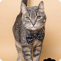Adopt A Pet :: Elliot - Wyandotte, MI