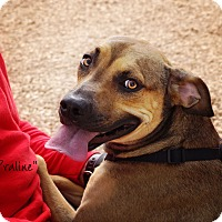 Adopt A Pet :: PRALINE - Lubbock, TX