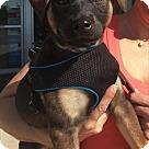 Adopt A Pet :: Baby Susannah