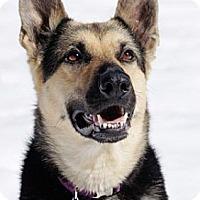 Adopt A Pet :: Sasha - Wayland, MA