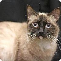 Adopt A Pet :: Mae - Sacramento, CA
