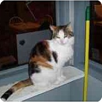 Adopt A Pet :: Snickers - Hamburg, NY