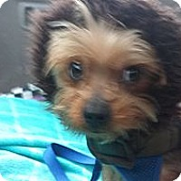 Adopt A Pet :: Bruno - San Dimas, CA
