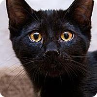 Adopt A Pet :: Puddles - Irvine, CA