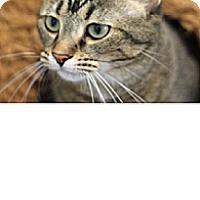 Adopt A Pet :: Coco - El Cajon, CA